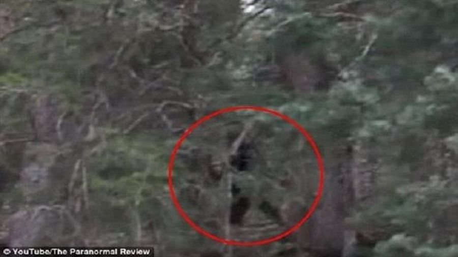 Phát hiện quái vật Bigfoot to lớn trong rừng gây sốc?