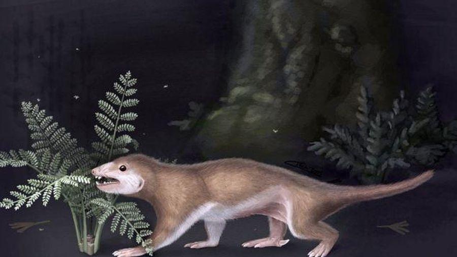 Phát hiện tổ tiên 165 triệu năm tuổi của loài người