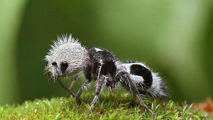 Những động vật có hình thù siêu kỳ lạ sẽ khiến bạn ngạc nhiên khi nhìn thấy