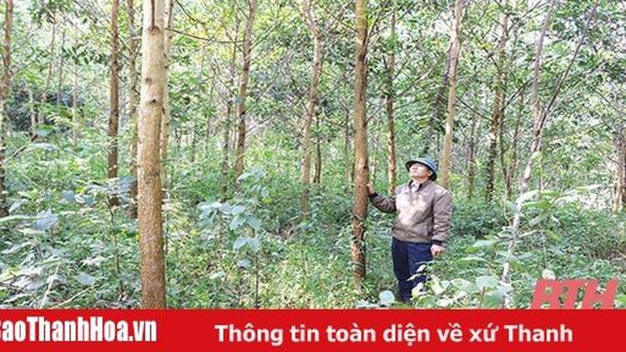 Huyện Như Xuân đẩy mạnh trồng rừng gỗ lớn