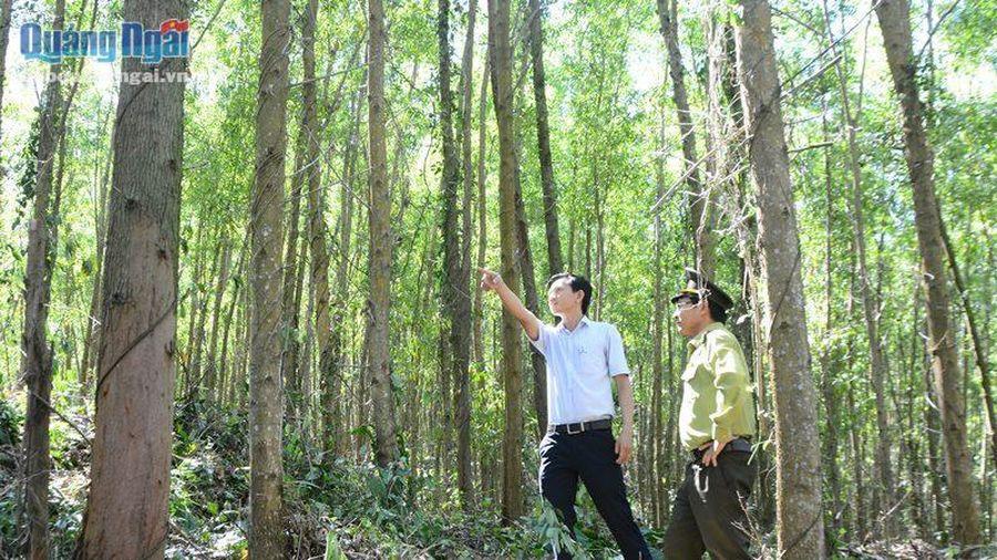 Thông qua đề án chi trả dịch vụ môi trường rừng áp dụng với các cơ sở sản xuất công nghiệp và sử dụng nước