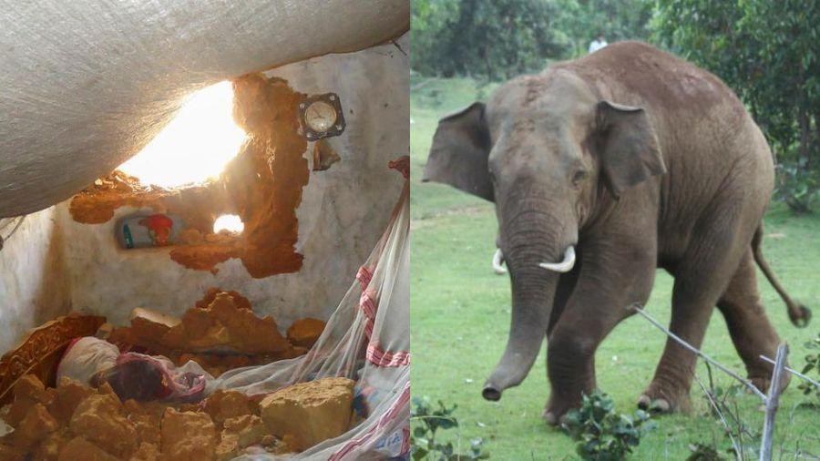 Voi húc đổ tường khiến bé gái 10 tháng tuổi bị đất đá chôn vùi, đứa trẻ cất tiếng khóc và hành động của con vật khiến gia đình há hốc