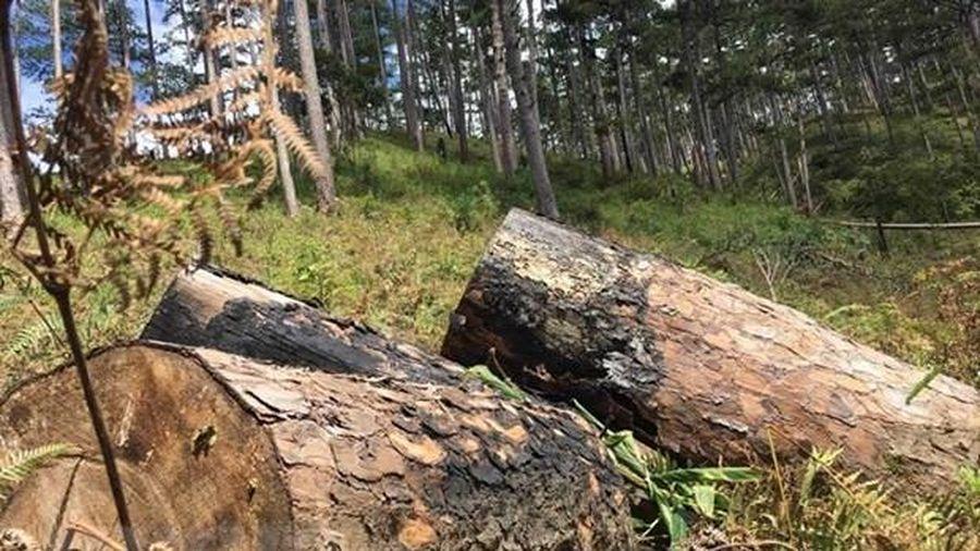Khởi tố vụ án hủy hoại rừng phòng hộ đầu nguồn