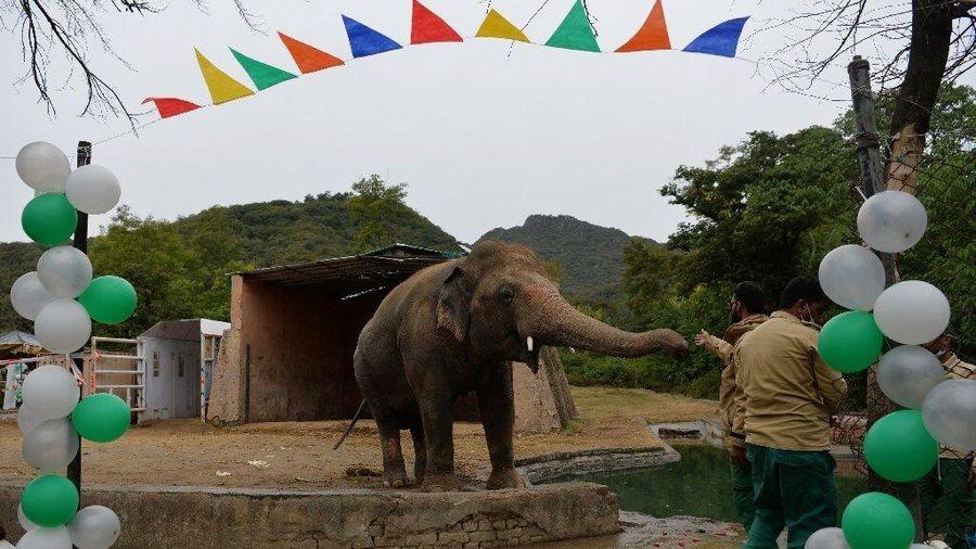 'Con voi cô đơn nhất hành tinh' sắp đến nhà mới