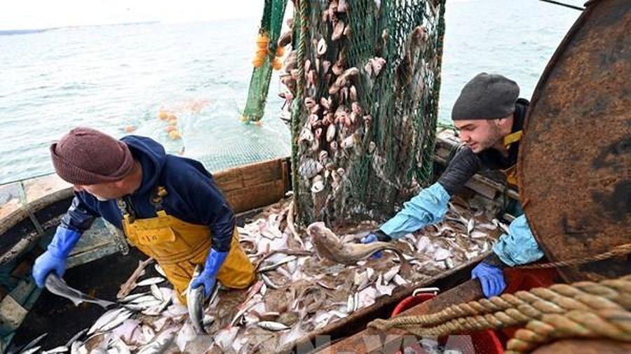Đánh bắt cá vẫn là trở ngại trong cuộc đàm phán nước rút giữa Anh và EU