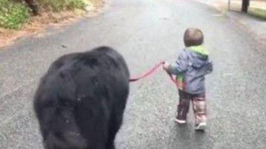 Chết cười cậu bé mẫu giáo rủ 'anh trai' bỏ nhà ra đi vì giận mẹ