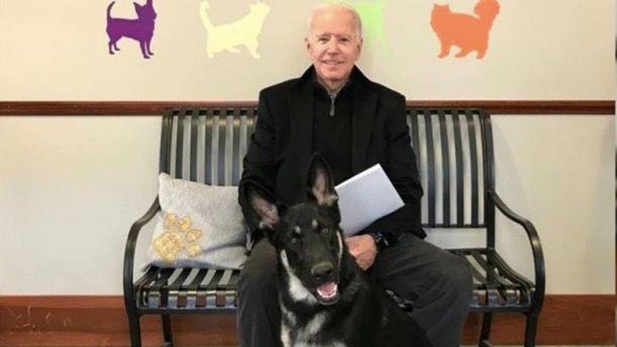 Tổng thống Mỹ đắc cử Joe Biden bị thương