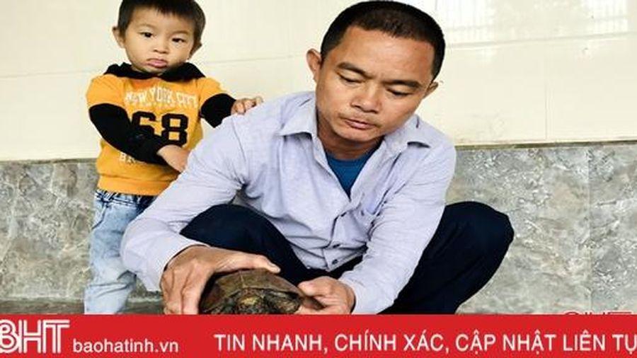 Người dân Hương Sơn giao nộp rùa sa nhân quý hiếm