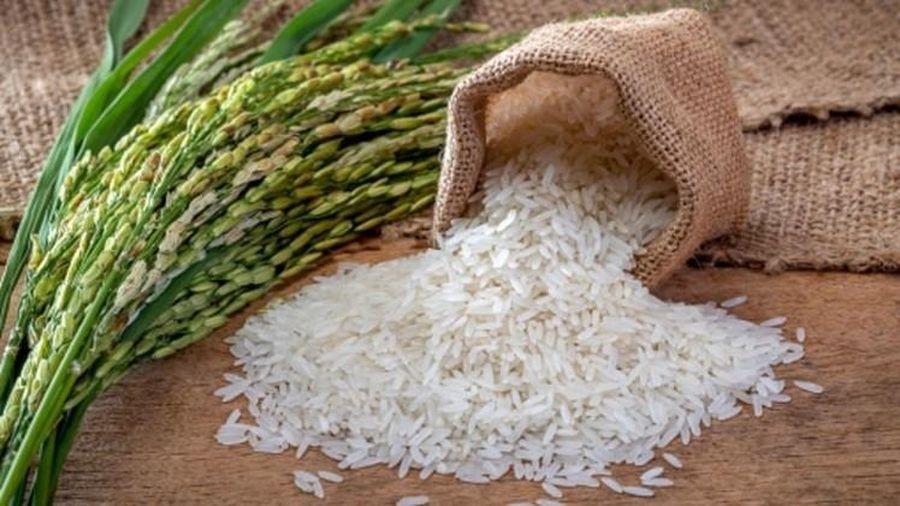 Giá lúa gạo hôm nay ngày 30/11: Đầu tuần, giá lúa gạo tăng nhẹ