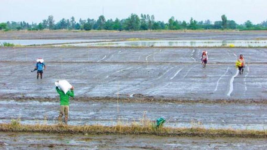 Vĩnh Thạnh hỗ trợ nông dân sản xuất lúa đông xuân
