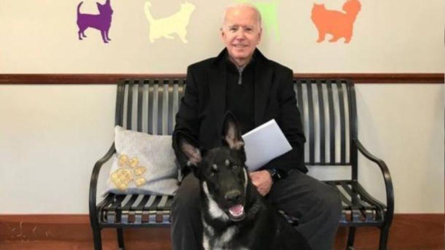 Bác sĩ tiết lộ ông Joe Biden bị thương sau khi chơi với thú cưng