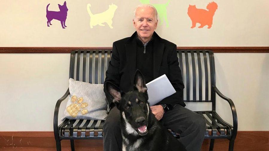 Ông Biden bị trật mắt cá chân khi chơi đùa cùng thú cưng