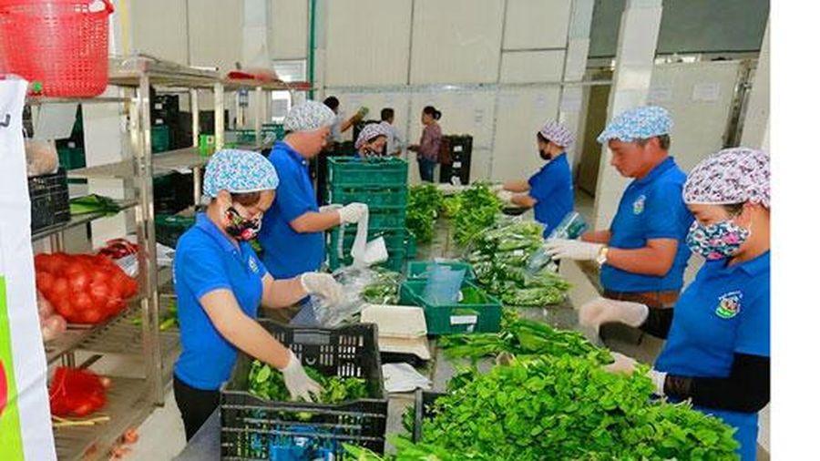 Bảo đảm nguồn nông sản cho người dân Thủ đô dịp cuối năm: Chủ động gia tăng sản xuất