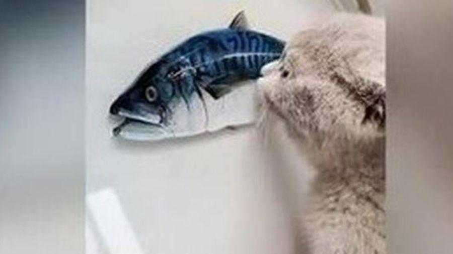 Bật cười chú mèo cố ăn cá 3D in trên đĩa