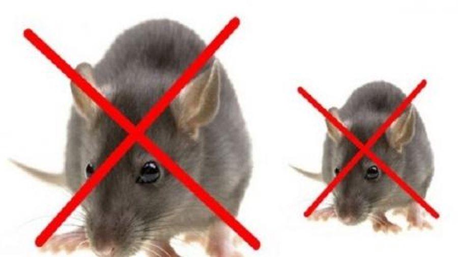 Thuốc diệt chuột thế hệ mới mang tính đột phá cao