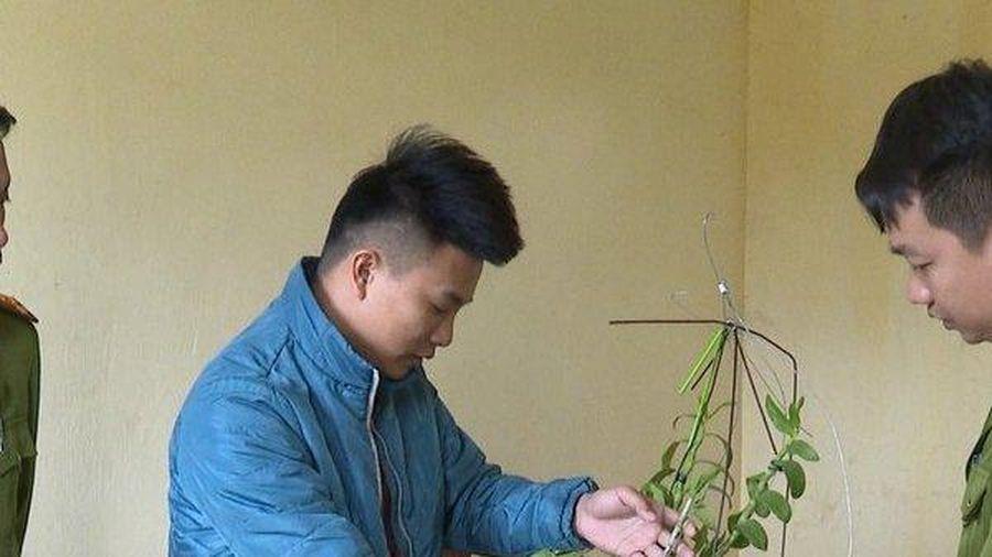 Thủ đoạn 'hô biến' phong lan thường thành đột biến để lừa cả tỷ đồng