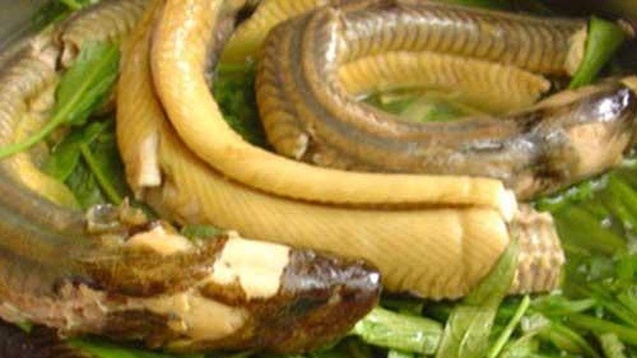 Sai lầm khi ăn lươn có thể khiến bạn bị ngộ độc