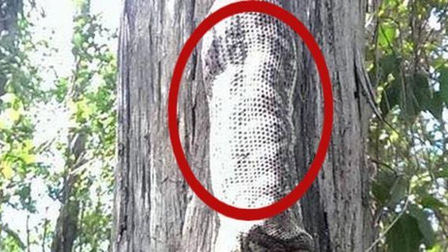 Ngồi dưới gốc cây thì nghe thấy 'tiếng nuốt' trên đầu, người phụ nữ kinh sợ trước cảnh tượng bắt gặp