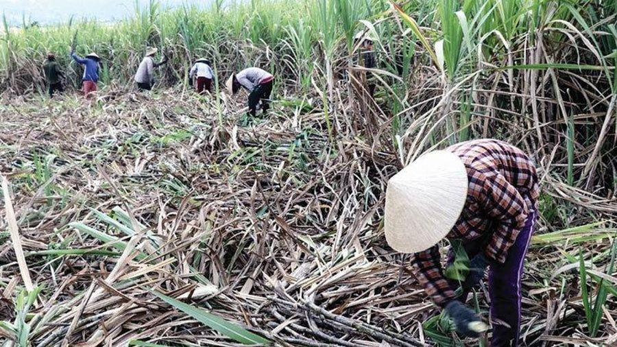 Hàng tốn đầy kho: DN 'chạy ăn từng bữa', nông dân bỏ đất đi làm thuê