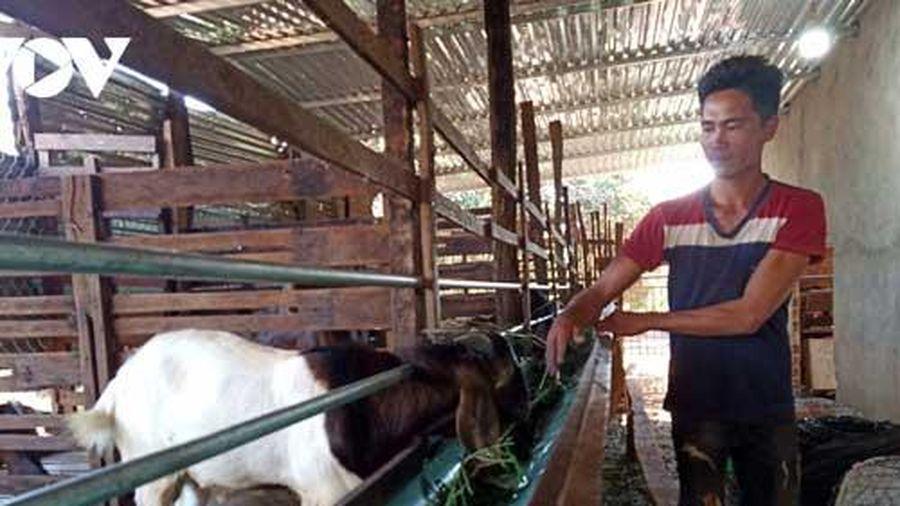 Gia Lai: Thủ phủ hồ tiêu Chư Pưh 'hồi sinh' nhờ chuyển đổi cơ cấu cây trồng