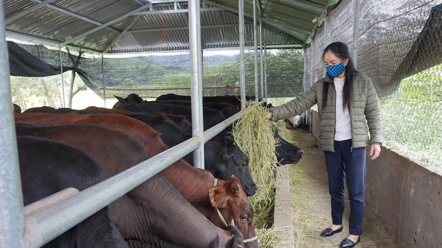 Nâng cao hiệu quả lĩnh vực chăn nuôi