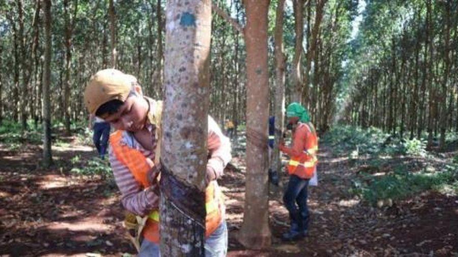 Năm xuất khẩu nông sản đột phá của Campuchia