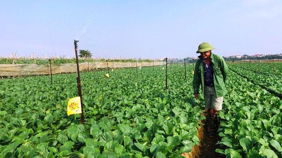 Hà Nội mở rộng diện tích trồng rau an toàn