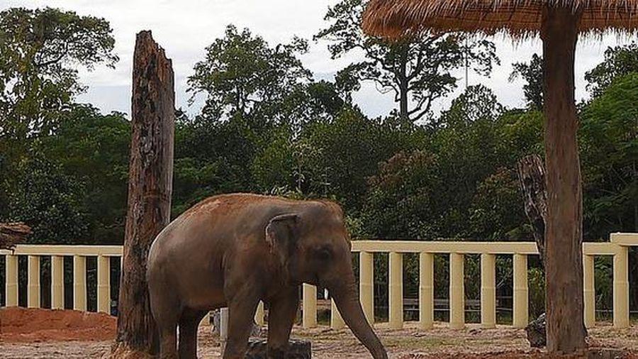 Sau 8 năm, chú voi đơn độc nhất thế giới đã được gặp đồng loại
