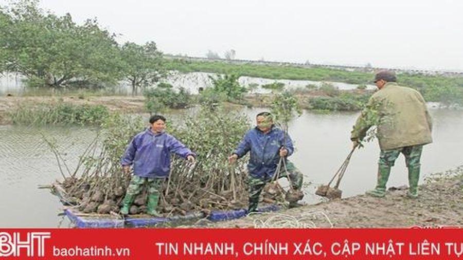Hà Tĩnh có thêm gần 66 ha rừng ngập mặn ven biển