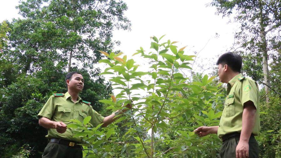 Trồng cây bản địa hỗn loài tại rừng phòng hộ