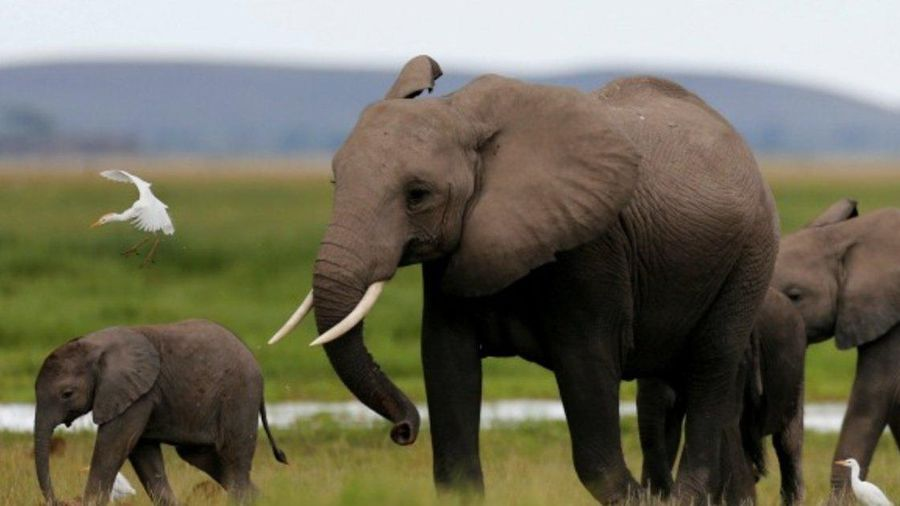 Namibia bán đấu giá 170 con voi 'giá trị cao'