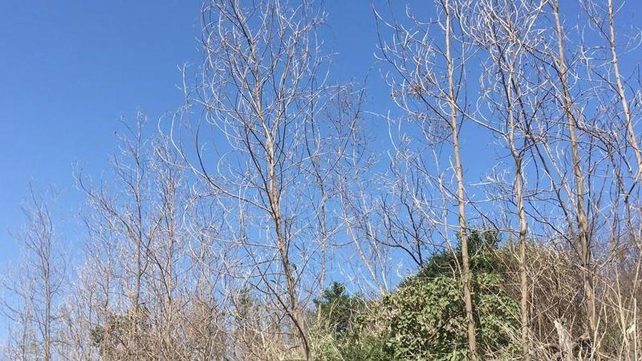 Cây rừng chết khô vì khí thải Cty Trúc Thôn: Sở TNMT Hải Dương nói gì?