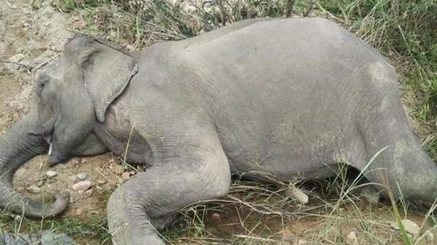 Con voi cuối cùng ở Bắc Tây Nguyên gục chết bên bờ sông