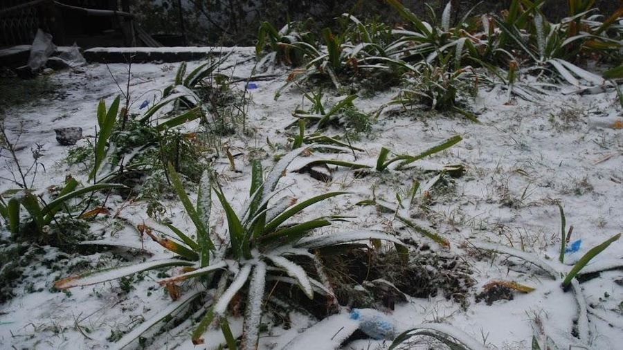 Vùng núi Bắc Bộ và Bắc Trung Bộ có khả năng xảy ra băng giá, sương muối