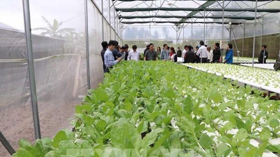 Tìm hướng tăng chuỗi giá trị cung ứng nông sản Nam Trung bộ và Tây Nguyên