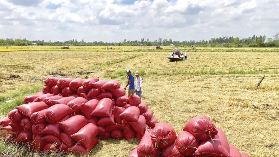 Được ưa chuộng, giá gạo xuất khẩu tăng mạnh
