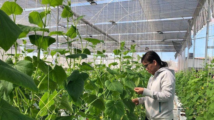 Nhiều giải pháp tạo ra cách mạng trong sản xuất nông nghiệp