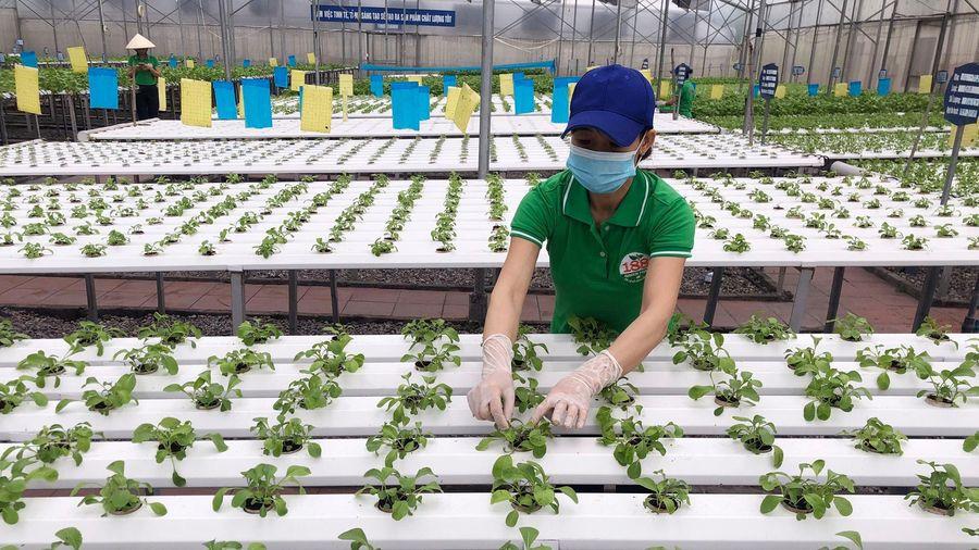 TX Đông Triều: Hỗ trợ, thúc đẩy doanh nghiệp phát triển