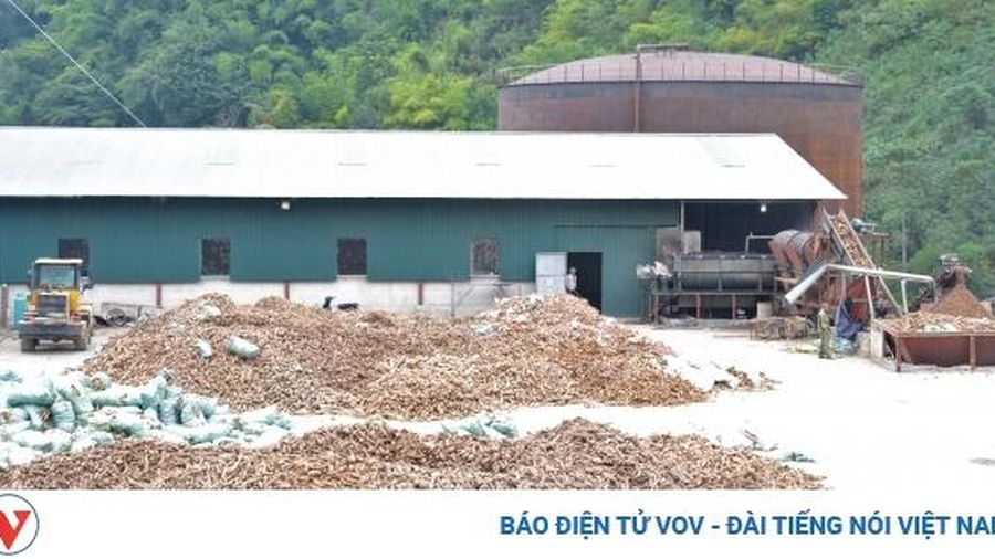 Tạm dừng hoạt động Nhà máy chế biến sắn của Công ty CP Tinh bột Hồng Diệp, Điện Biên