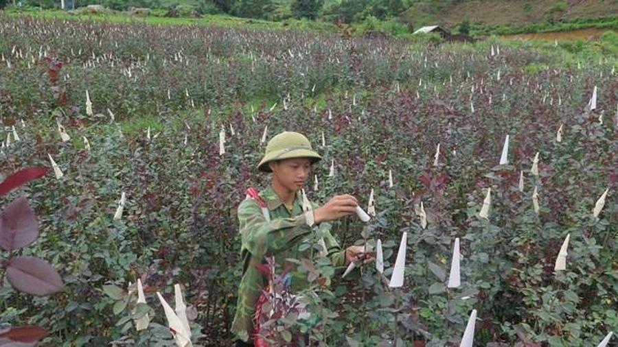 Đào tạo nghề cho lao động nông thôn ở Lai Châu