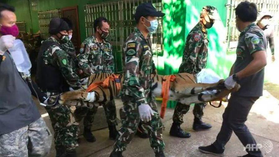 Cảnh sát Thái Lan đột kích vườn thú giả, phát hiện xác hổ bị chặt đầu
