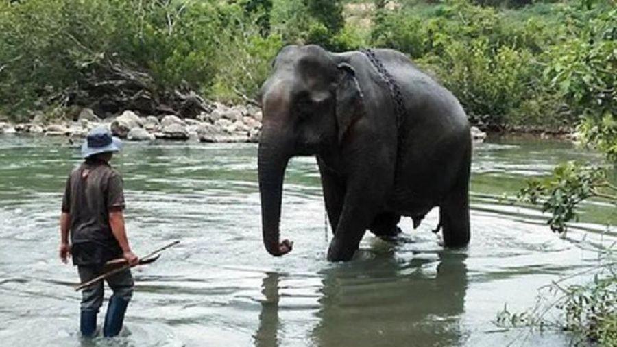 Ký ức về con voi cuối cùng ở Gia Lai