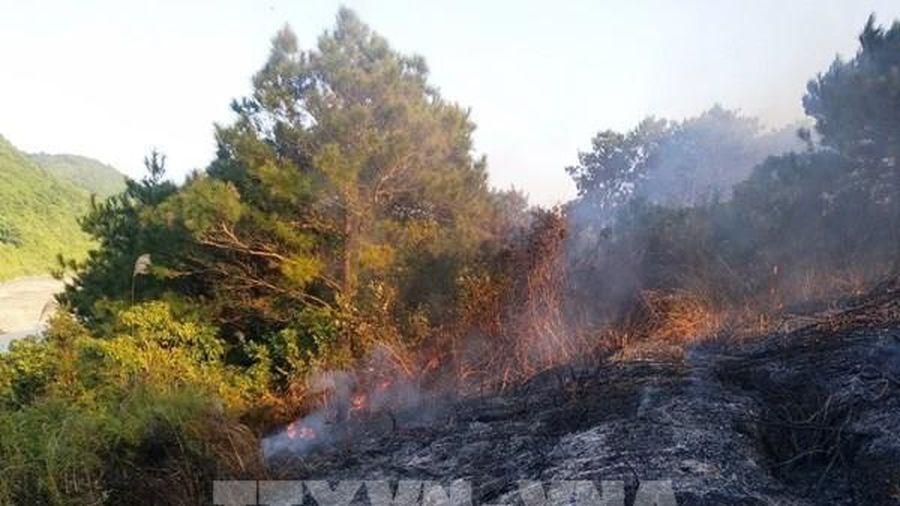 Quảng Ninh: Người dân mong sớm giải quyết tranh chấp đất rừng trên đảo Vĩnh Thực