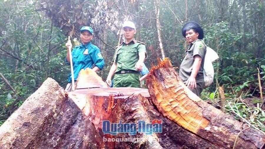 Trà Bồng: Người dân phá rừng, ngành chức năng nói khó xử lý