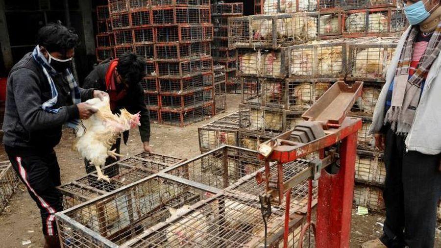 Quay cuồng vì COVID-19, châu Á còn gồng mình chống cúm gà H5N8