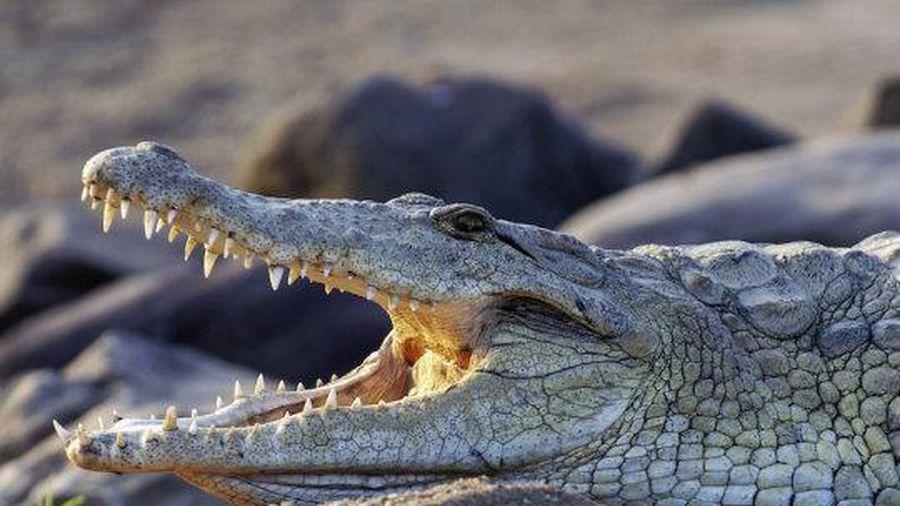 Nguyên nhân cá sấu tiến hóa chậm