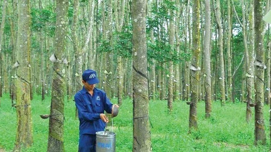 Ngày 20/1, Cao su Đồng Phú - Đắk Nông (DPD) giao dịch trên UPCoM với giá tham chiếu 9.700 đồng/CP