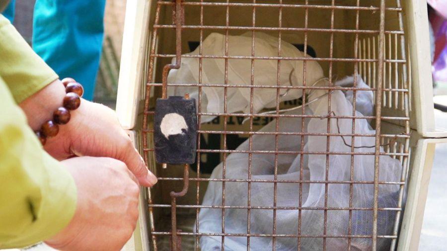 Bắt thêm 3 con khỉ 'đại náo' nhà dân ở TP.HCM
