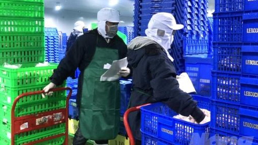 Kiểm tra an toàn thực phẩm kho lạnh của Bách Hóa Xanh