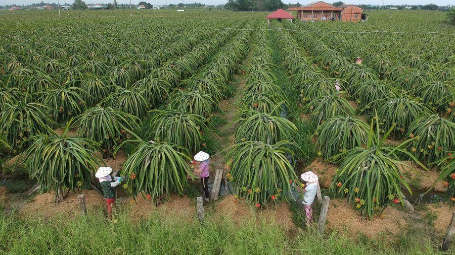 Giám sát mã số vùng trồng nông sản xuất khẩu